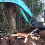 伐採の施工